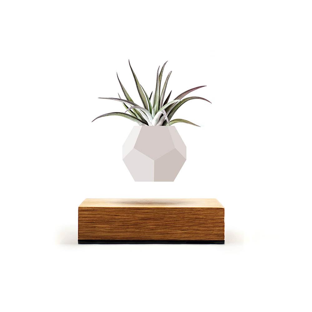 Flyte Lyfe - Schwebende Vase weiß - Basis Eichenholz