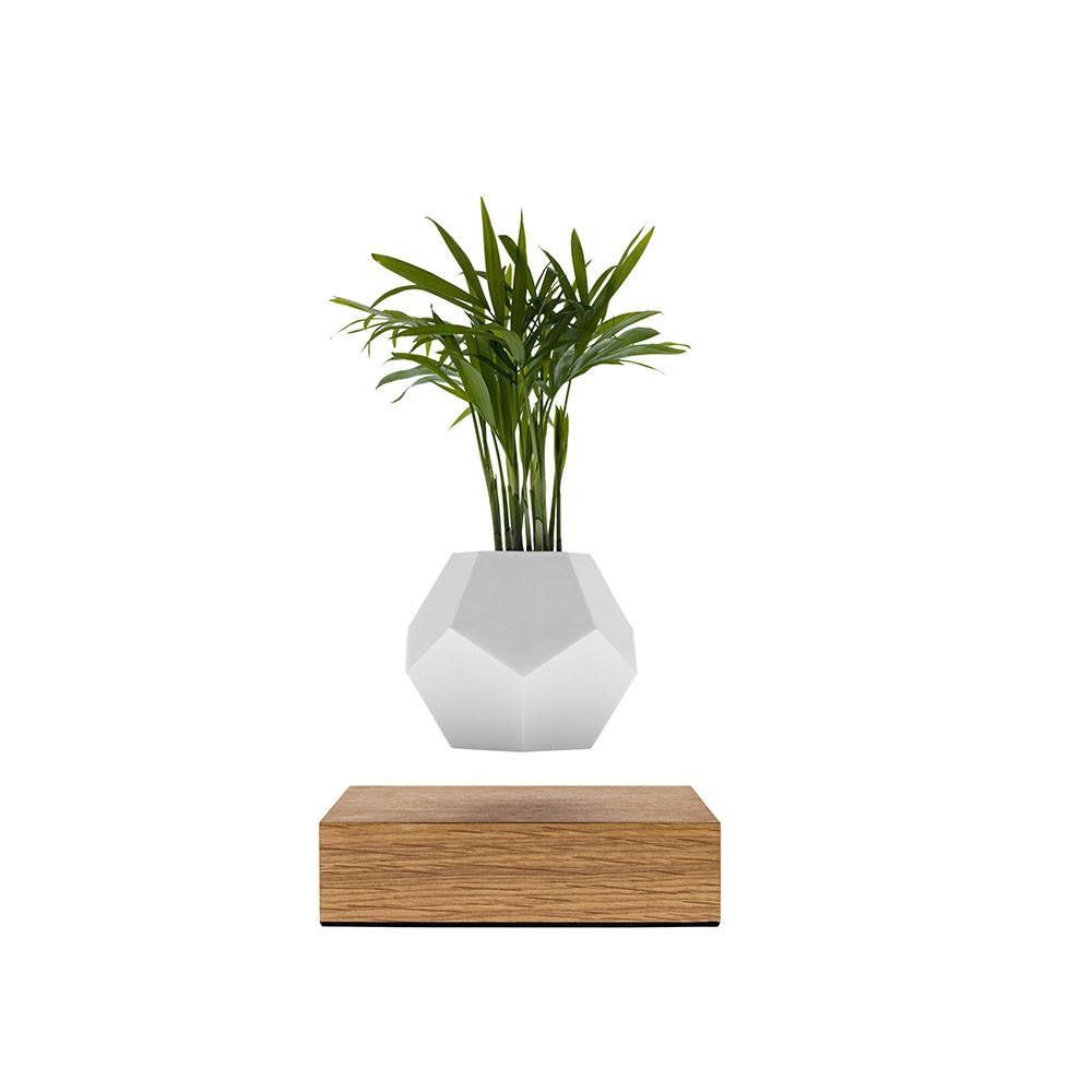 Flyte Lyfe - Schwebende Vase mit Pflanze