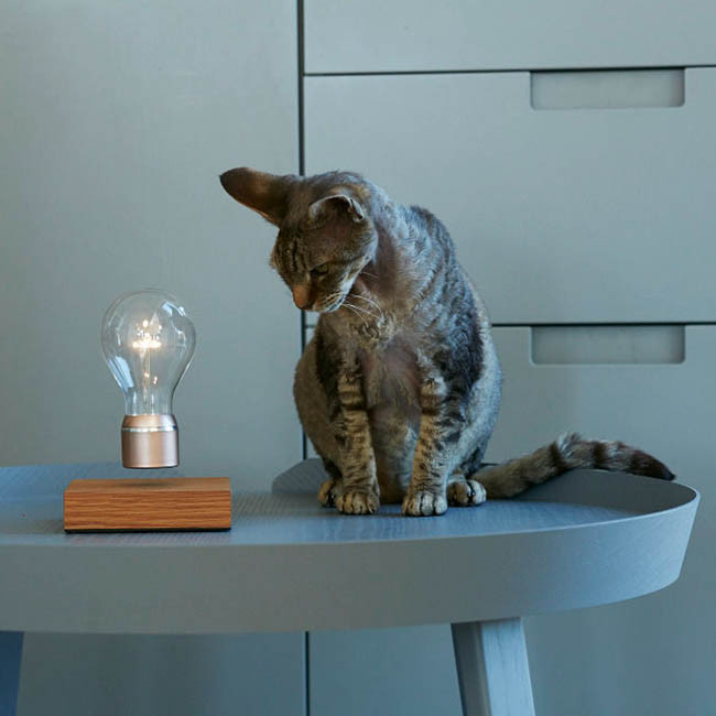 Flyte Buckminster - Schwebende Dekoleuchte - Ambiente Katze